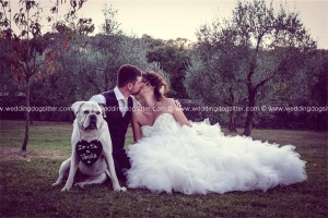 BOXER AL MATRIMONIO WEDDING DOG SITTER TOSCANA